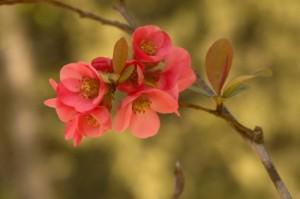 iStock_blossom000005962685XSmall